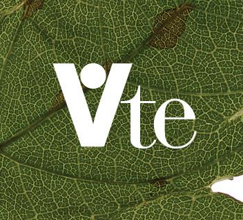 Vite - Ristorante - Marco Strina